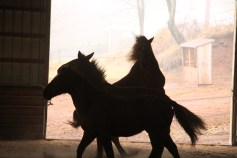 horses-at-horses-and-horizons-therapeutic-learning-center-west-penn-1-21-2017-73