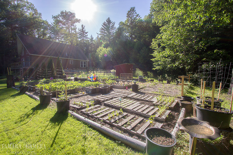 When your garden is looking worse for the wear, that can be very frustrating during the warmer months. Here are Brilliant Ways to Really Upgrade your Garden