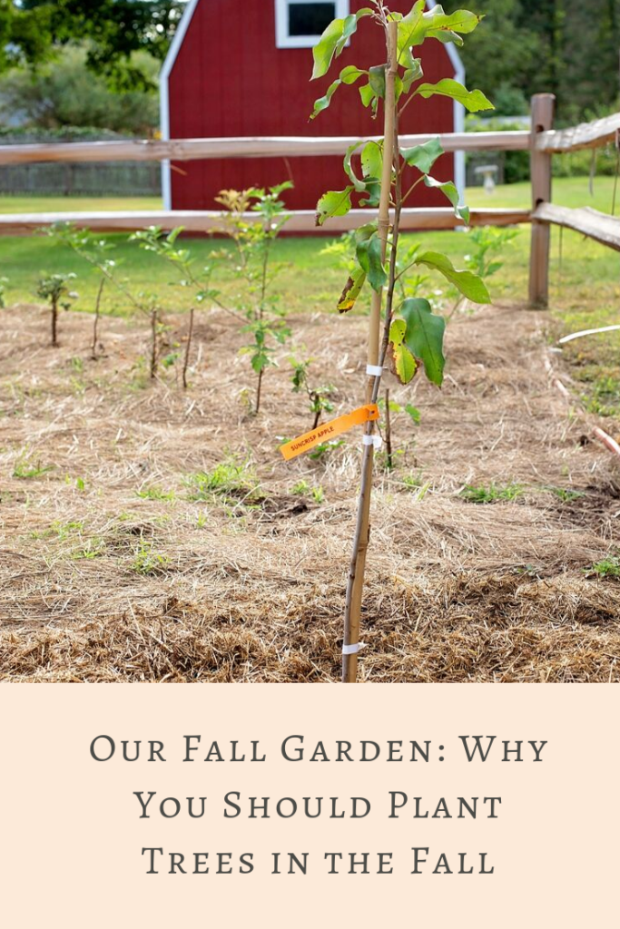 A tree planting adventure with the Arbor Day Foundation is a great family activity, from selecting to planting #ad Here's why you should plant in the fall!