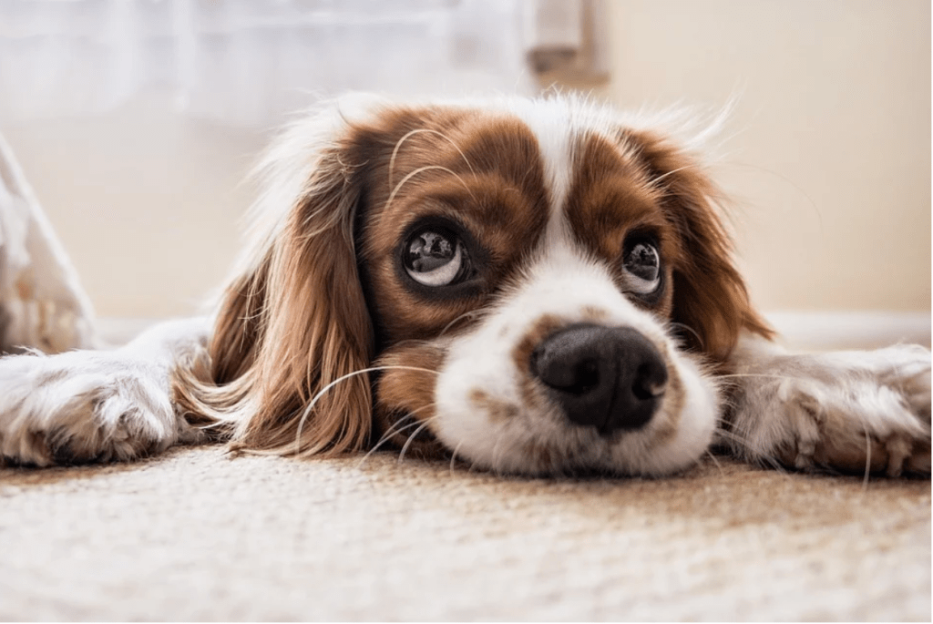 4 Great Ways to Stimulate Your Dog's Mind. Dogs are just like humans in many ways. They are empathetic, loyal, and excitable.
