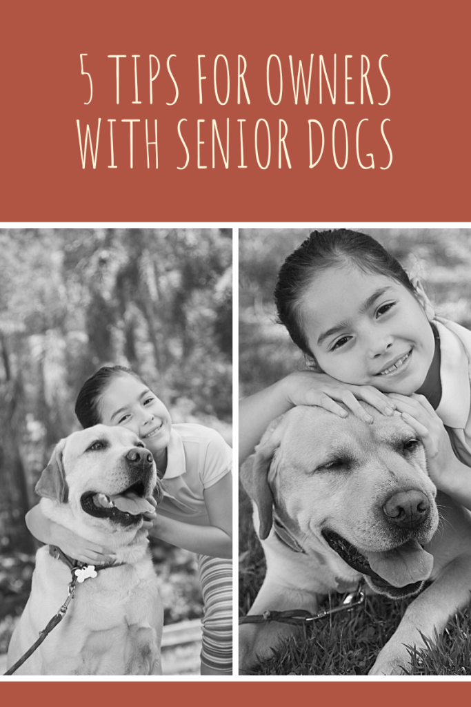 5 Tips for Owners with Senior Dogs. Although it might seem overwhelming, our 5 top tips will ensure your senior dog stays happy and healthy.