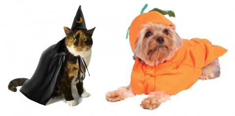 Halloween-pets