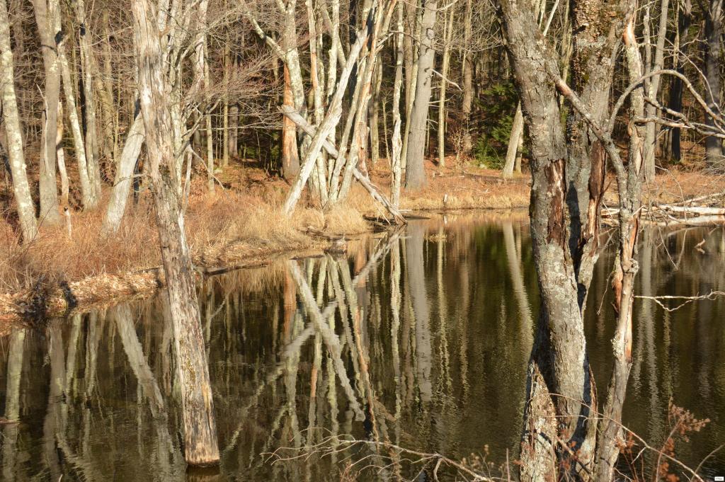 Massachusetts, Beartown State Forest