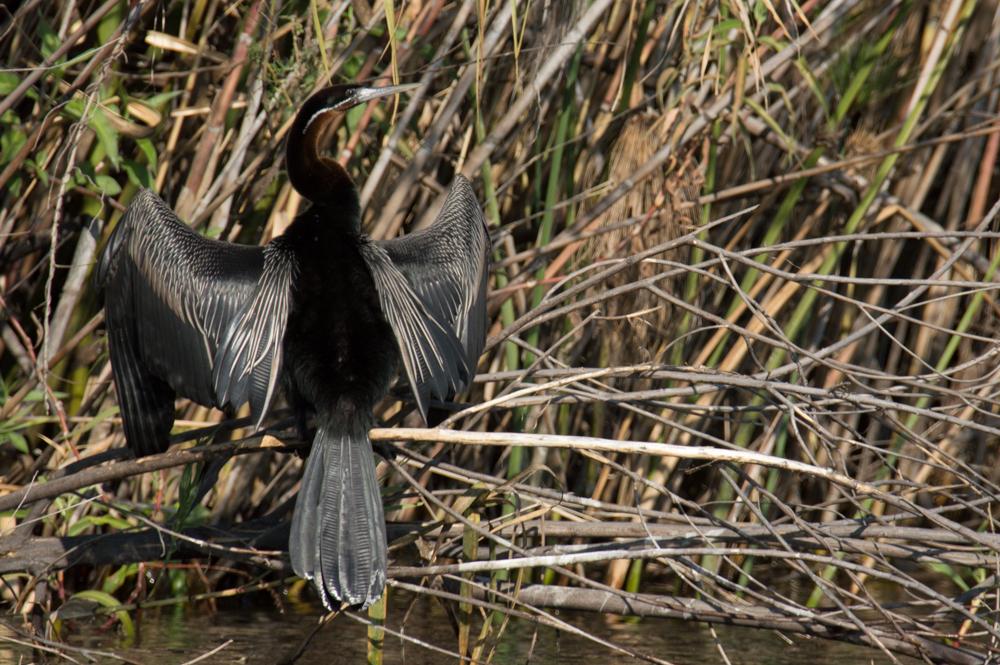 Botswana, Okavango Delta, Africa