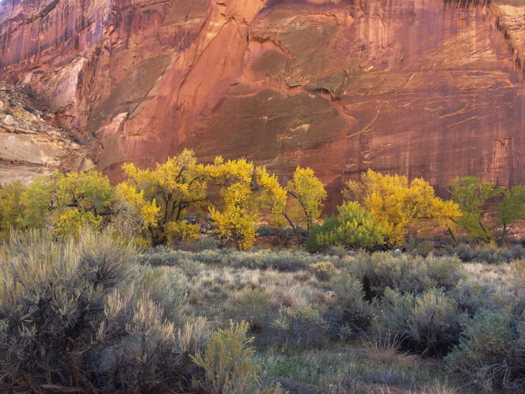 Utah, fall, fall color, redrock