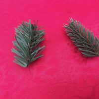 Christmas Tree Branch Samples Dempsey Lead Safe Mama 1
