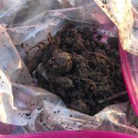 Soil Sample Four Lead Safe Mama Missouri
