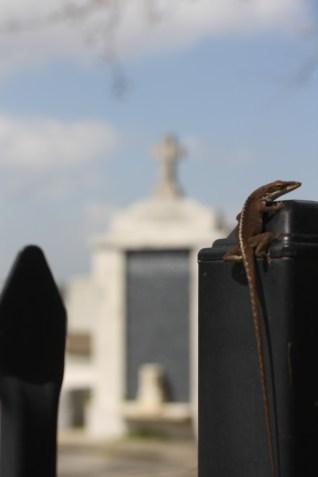 Lizard, New Orleans, LA