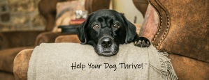 My Dog Thrives with Tamara Tokash at Courteous Canines