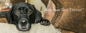 Help Your Dog Thrive! - Courteous Canines - Tamara Tokash - My Dog Thrives