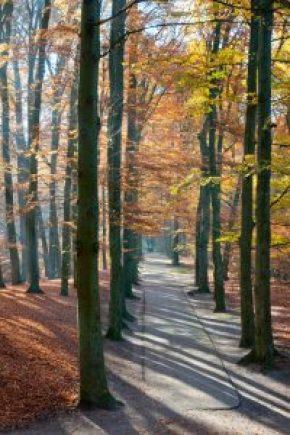 Herfstochtend park Sonsbeek