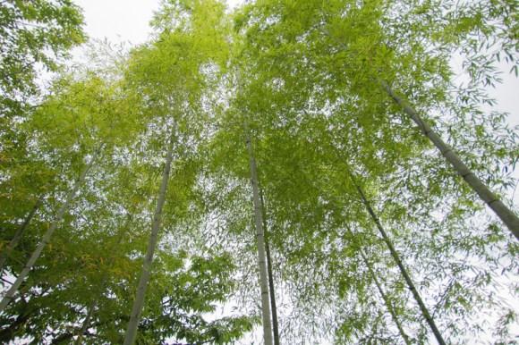 tanabata2015 (1)