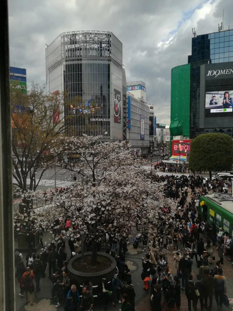 JR渋谷駅から渋谷エクセルホテル東急へ向かう途中です。