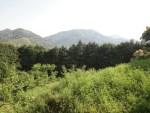 熊野古道で初心者におすすめ 京都から日帰りコースと詳細について