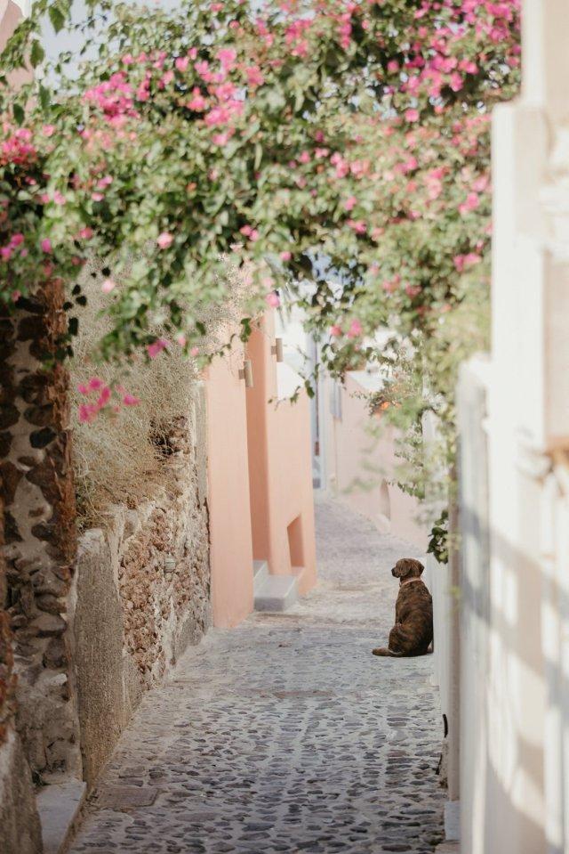 Dog in an alleyway in Oía, Santorini Greece by Tami Keehn