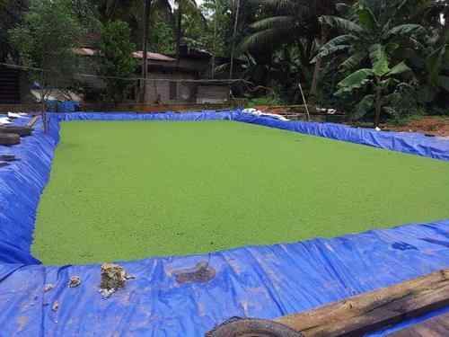 Azolla Cultivation in Tamil