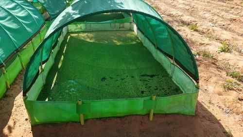 Azolla Cultivation in Tamil - shed with Pond