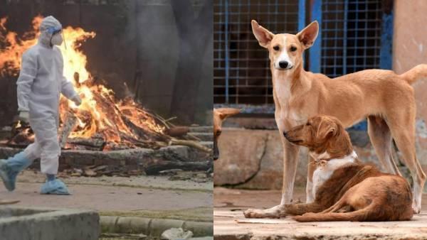 ओडिशा में कोरोना क्रूरता.. अफ़सोस की बात है कि कुत्ता अधजली लाशों को खा जाता है