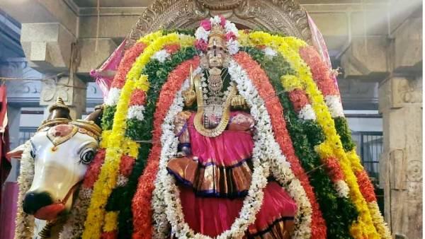 श्रीरंगम रंगनाथर मंदिर में नवरात्रि उत्सव रंगनाचियार मंदिर - माँ तिरुवाड़ी दर्शन