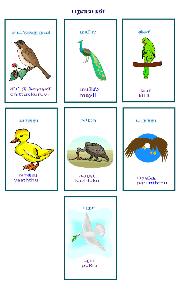 Play a Memory game with Tamil Vocabulary on Birds.