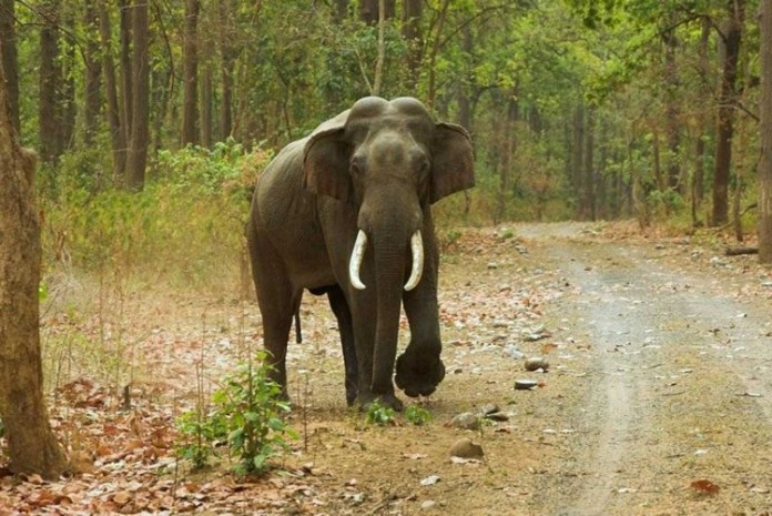 Court warning on catching chinnathambi elephant