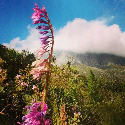 Travel Photo Essay - Jonkershoek Nature Reserve