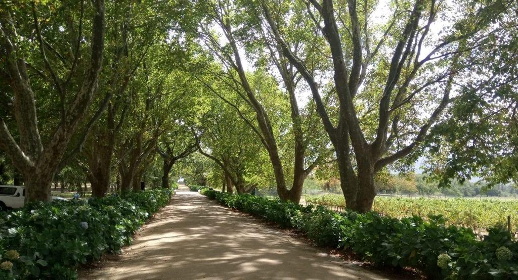 boschendal-rhone-driveway