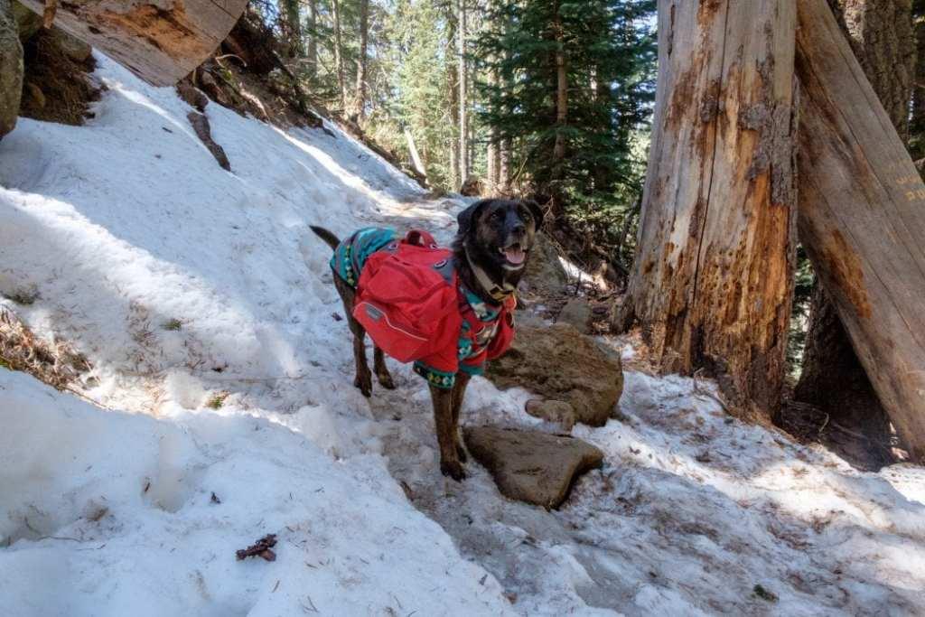 the-downward-dog-blog-erin-maxson