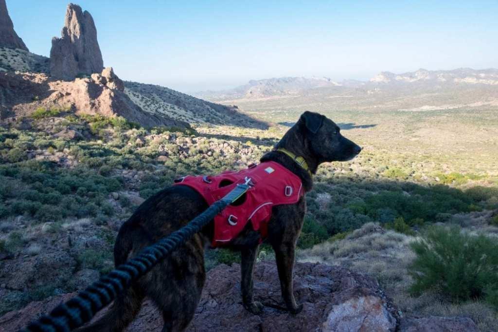 dog-friendly-hikes-america