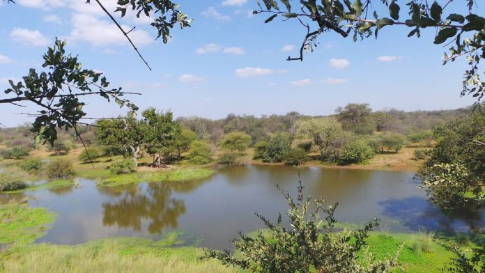 water-hole-limpopo