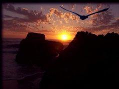 Eagle Flying Into Sunset