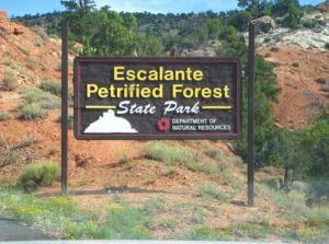 petrifiedforest