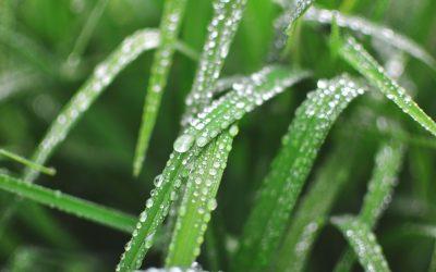 Sweet Summer Rain