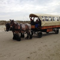 The West Frisian Islands - Holland's northern wilderness