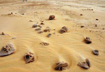 pustinjska-ruza-6