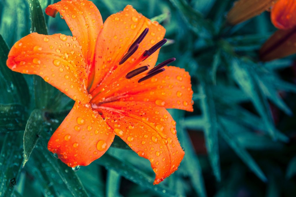 hot weather flowers for curb appeal - sell your home tampa bay