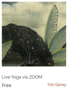 Free Yoga Via Zoom