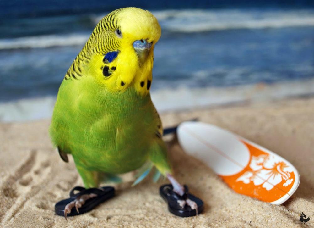 программа очень фото смешных попугаев изначально