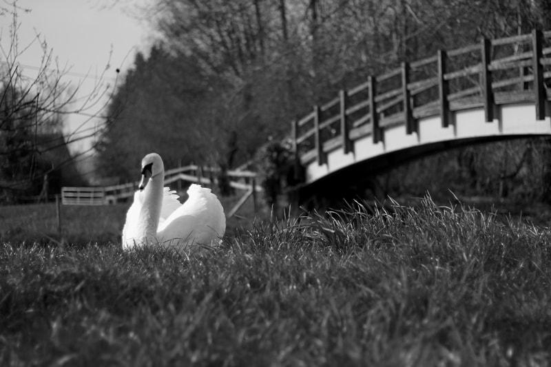 Henny Swan Exterior Photography