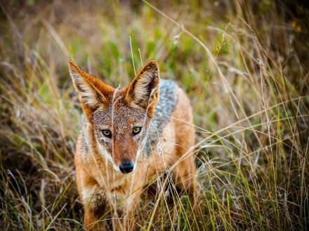 Ruben et le langage des animaux – Première partie