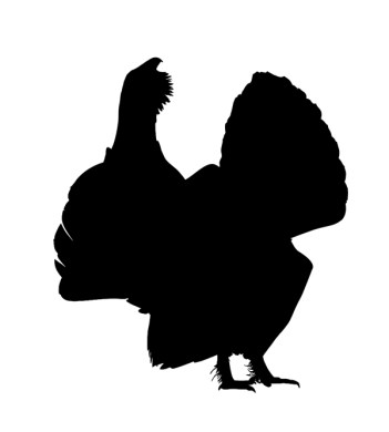 1-logo-urogallo-negro