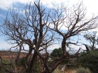 OttosPoint_Tree