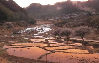 上倉沢の棚田