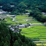 竹(たけ)| 福岡県東峰村