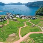 日引(ひびき)| 福井県高浜町