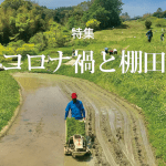特集「コロナ禍と棚田」