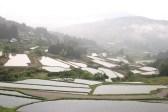 「坂折の棚田1」 撮影者:itazu tunemiti 撮影地:恵那市坂折の棚田 撮影日:2003年9月10日
