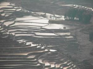 「中国の棚田」 撮影者:加藤国章 撮影地:中国雲南省元陽 撮影日:2005年2月20日