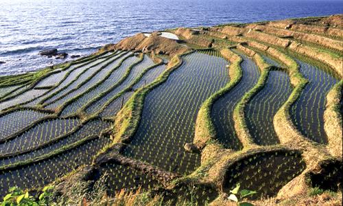 【石川県輪島市白米千枚田】 国の名勝地として古くから観光の名所として有名。