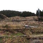 樫原の棚田中段の放棄地